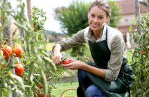 Как правильно выращивать овощи в теплице