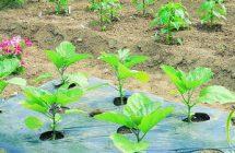Уход за овощами
